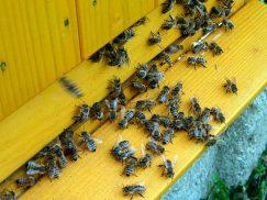 01 včely